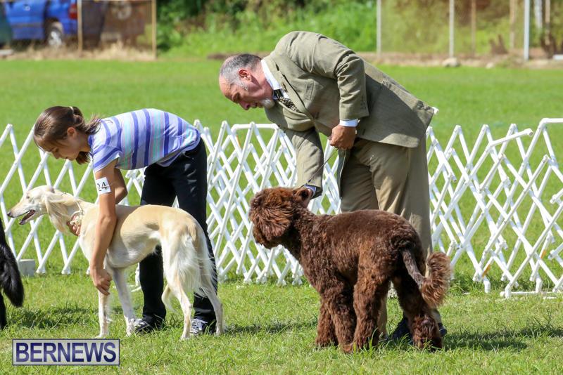 Dog-Show-Bermuda-October-24-2015-4