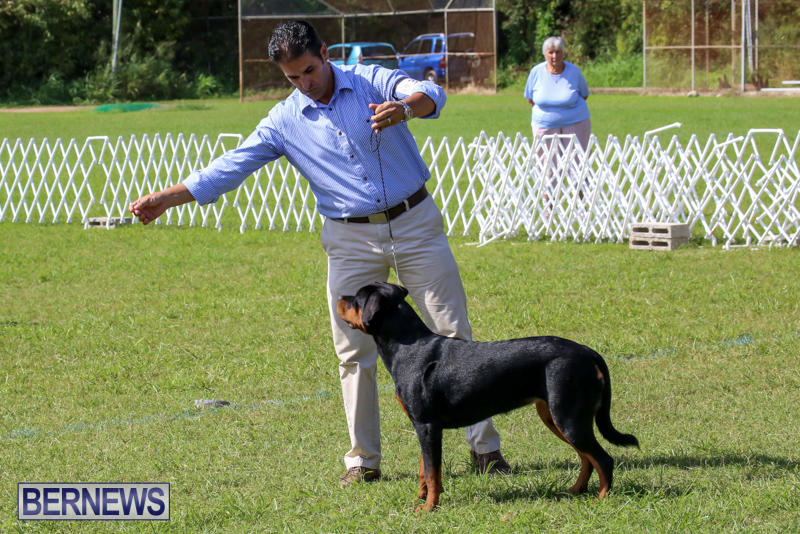 Dog-Show-Bermuda-October-24-2015-40