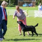 Dog Show Bermuda, October 24 2015-42