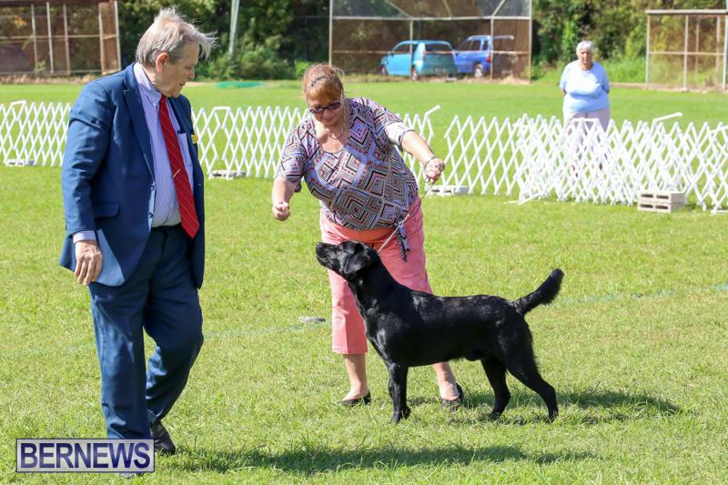 Dog-Show-Bermuda-October-24-2015-42