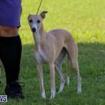 Dog Show Bermuda, October 24 2015-43