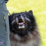Dog Show Bermuda, October 24 2015-45