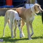 Dog Show Bermuda, October 24 2015-46