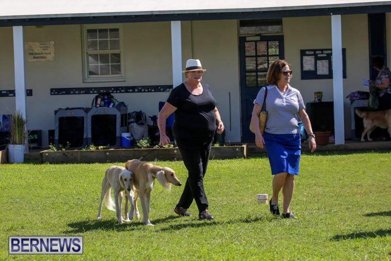 Dog-Show-Bermuda-October-24-2015-47