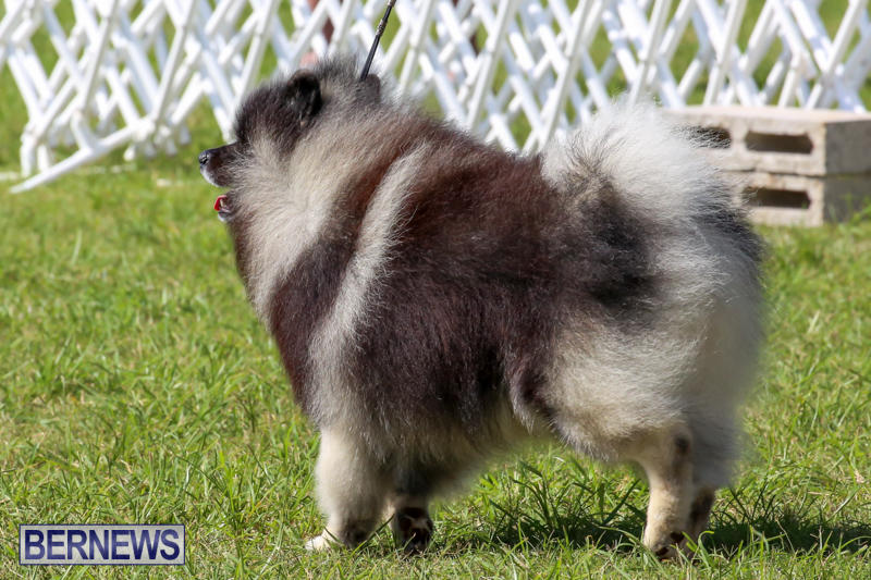 Dog-Show-Bermuda-October-24-2015-48
