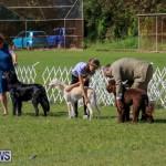 Dog Show Bermuda, October 24 2015-5