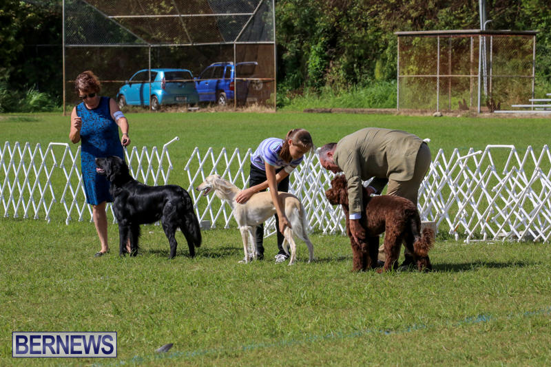 Dog-Show-Bermuda-October-24-2015-5