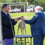 Dog Show Bermuda, October 24 2015-50