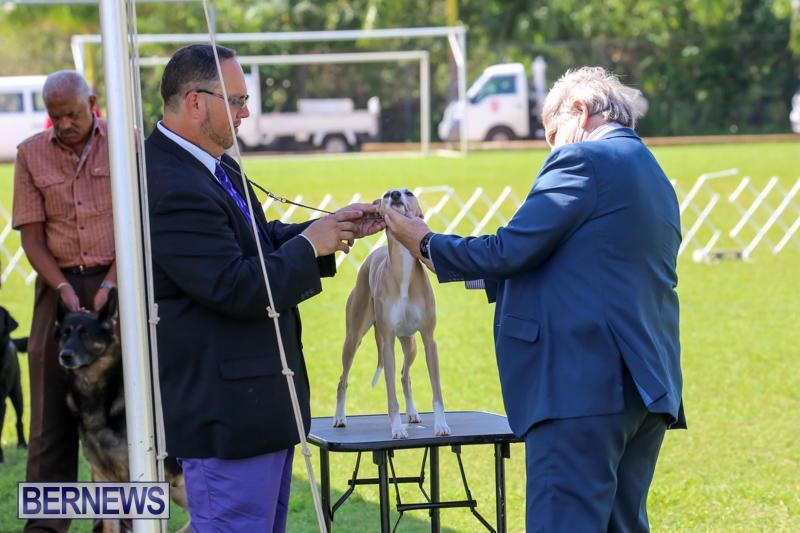 Dog-Show-Bermuda-October-24-2015-50