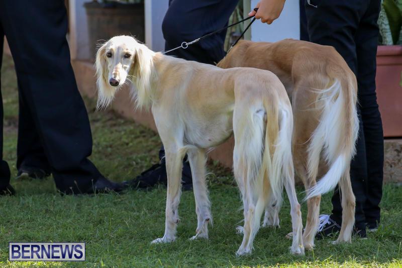 Dog-Show-Bermuda-October-24-2015-54
