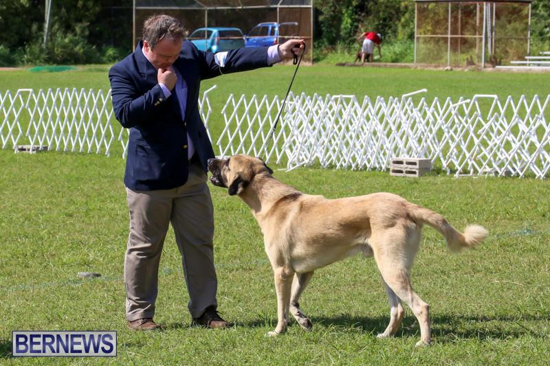 Dog-Show-Bermuda-October-24-2015-58