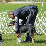 Dog Show Bermuda, October 24 2015-6