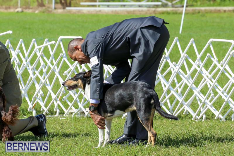 Dog-Show-Bermuda-October-24-2015-6