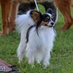 Dog Show Bermuda, October 24 2015-61