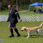 Dog Show Bermuda, October 24 2015-64