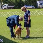Dog Show Bermuda, October 24 2015-68