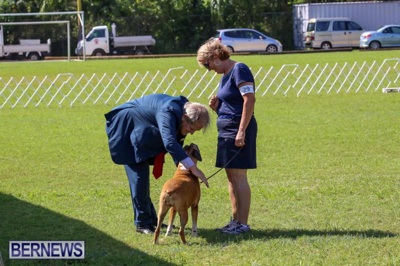 Dog-Show-Bermuda-October-24-2015-68