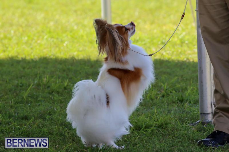 Dog-Show-Bermuda-October-24-2015-72