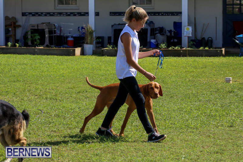 Dog-Show-Bermuda-October-24-2015-74