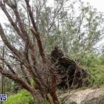 Hurricane Joaquin Bermuda, October 5 2015-14