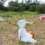 J&J Produce Pick Your Own Pumpkins Bermuda, October 23 2015-10