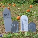 J&J Produce Pick Your Own Pumpkins Bermuda, October 23 2015-13
