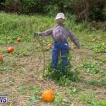 J&J Produce Pick Your Own Pumpkins Bermuda, October 23 2015-18