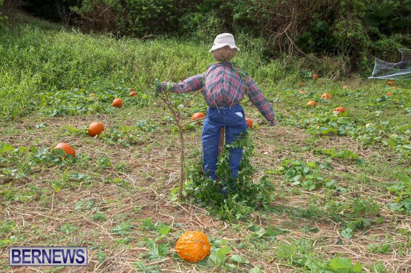 JJ-Produce-Pick-Your-Own-Pumpkins-Bermuda-October-23-2015-18