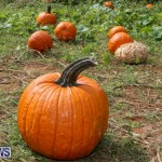 J&J Produce Pick Your Own Pumpkins Bermuda, October 23 2015-22