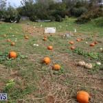 J&J Produce Pick Your Own Pumpkins Bermuda, October 23 2015-25
