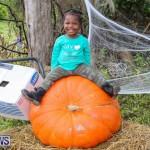 J&J Produce Pick Your Own Pumpkins Bermuda, October 23 2015-40