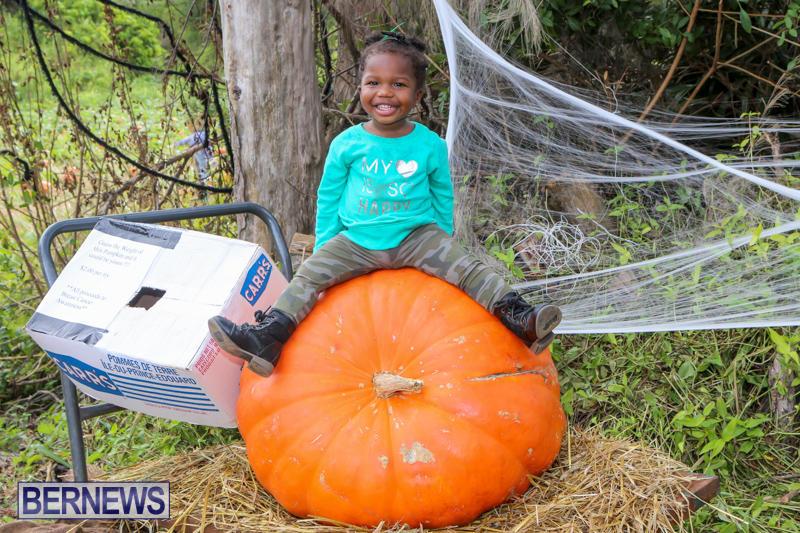 JJ-Produce-Pick-Your-Own-Pumpkins-Bermuda-October-23-2015-40