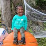 J&J Produce Pick Your Own Pumpkins Bermuda, October 23 2015-41