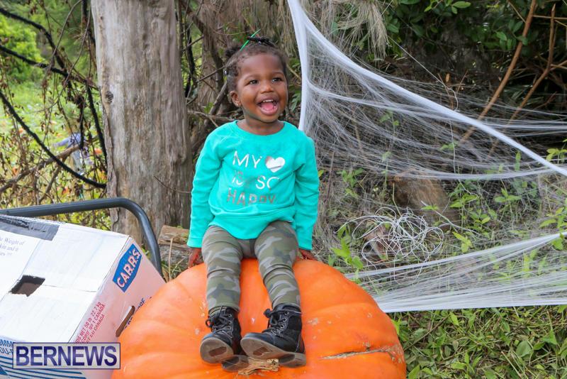 JJ-Produce-Pick-Your-Own-Pumpkins-Bermuda-October-23-2015-41