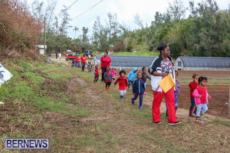 JJ-Produce-Pick-Your-Own-Pumpkins-Bermuda-October-23-2015-43