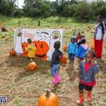 J&J Produce Pick Your Own Pumpkins Bermuda, October 23 2015-46
