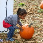 J&J Produce Pick Your Own Pumpkins Bermuda, October 23 2015-49