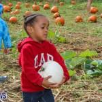 J&J Produce Pick Your Own Pumpkins Bermuda, October 23 2015-51