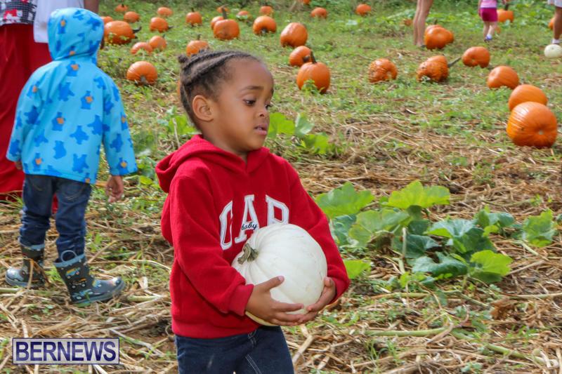 JJ-Produce-Pick-Your-Own-Pumpkins-Bermuda-October-23-2015-51