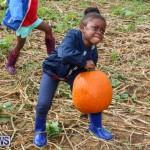 J&J Produce Pick Your Own Pumpkins Bermuda, October 23 2015-53