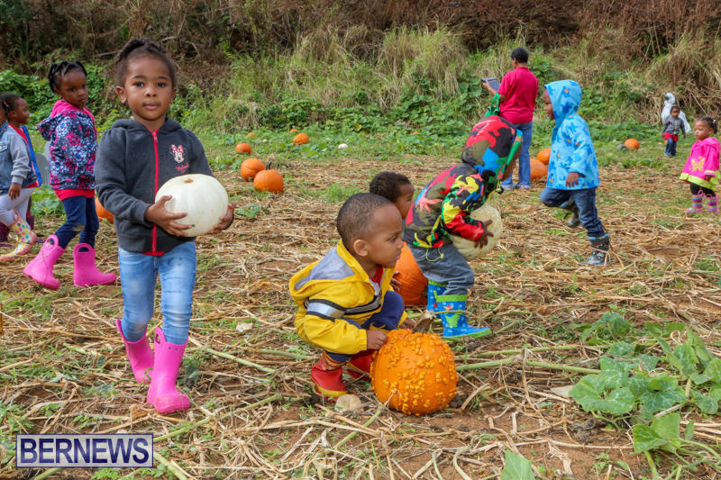 JJ-Produce-Pick-Your-Own-Pumpkins-Bermuda-October-23-2015-56