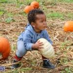 J&J Produce Pick Your Own Pumpkins Bermuda, October 23 2015-58