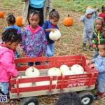 J&J Produce Pick Your Own Pumpkins Bermuda, October 23 2015-59