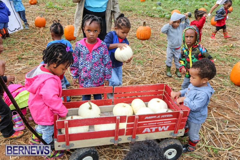 JJ-Produce-Pick-Your-Own-Pumpkins-Bermuda-October-23-2015-59