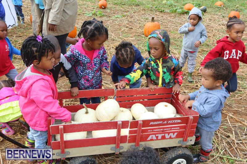 JJ-Produce-Pick-Your-Own-Pumpkins-Bermuda-October-23-2015-60