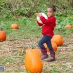 J&J Produce Pick Your Own Pumpkins Bermuda, October 23 2015-62