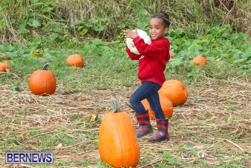 JJ-Produce-Pick-Your-Own-Pumpkins-Bermuda-October-23-2015-62