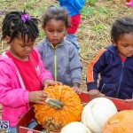J&J Produce Pick Your Own Pumpkins Bermuda, October 23 2015-63