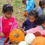 J&J Produce Pick Your Own Pumpkins Bermuda, October 23 2015-64