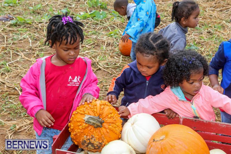 JJ-Produce-Pick-Your-Own-Pumpkins-Bermuda-October-23-2015-64